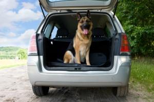 Hund anschnallen: Auch der Vierbeiner muss gesichert werden. Anschnallen ist nicht unbedingt Pflicht.