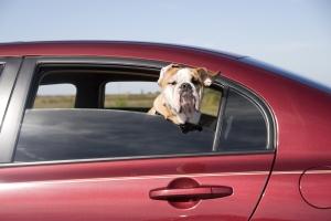 Hunde gelten im Auto als Ladung und müssen deshalb gesichert werden.